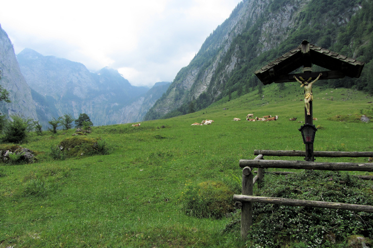 Dairy herd on the Alm by the Königssee