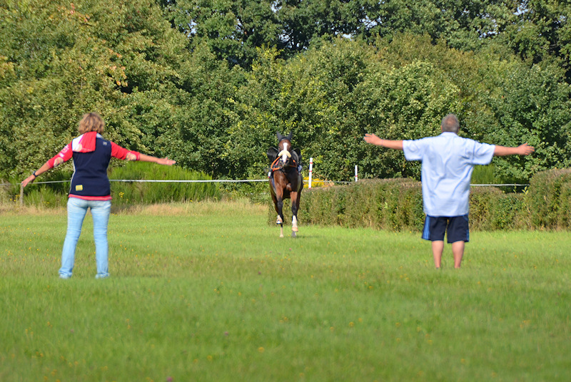 Spectators trying to stop a riderless horse at the Miesau horse races (Pferderennen)